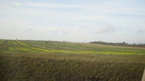 View from train - green fields at sunny day stock footage