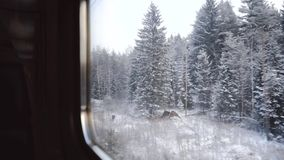 View from the train window. Winter forest in the snow. Northern cold landscape. Frozen pine trees closeup. Beautiful stock footage
