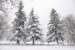 View of Transfer Beach park during a winter storm in Ladysmith, BC stock photos