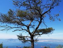 View through a Tree royalty free stock photo