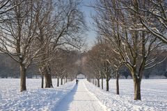 A view of the the tree avenue at the Elizabethan Wollaton Hall museum and gardens in the snow in winter in Nottingham, stock photos