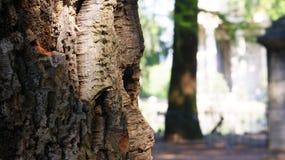 Tree bark in detail. View of tree bark in park Stock Photo
