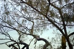 A view through tree branches to aqua-coloured water at a beach. Aqua coloured water laps at beach. It is seen through the branches of a she-oak, which is royalty free stock photo