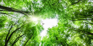 View through tree canopy with bird soaring Royalty Free Stock Image