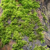 Tree with green moss on roots. View of tree with green moss on roots stock photo