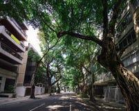 View of tree-lined avenue in Ipanema, Rio de Janeiro, Brazil.  royalty free stock image