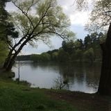 View of a tree near the lake in a cloudy rainy weather in the summer Royalty Free Stock Photos