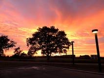 Tree shape at sunset stock image