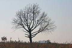 Bare tree on grassland against diffused sky. View of tree silhouette and branches against a diffused light pink sky stock photography