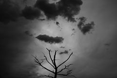 View of a tree silhouette under dark clouds on a dark grey background. Picture taken before the storm in Altai Republic, Russia Royalty Free Stock Photos