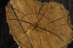 View of tree stump Royalty Free Stock Photos