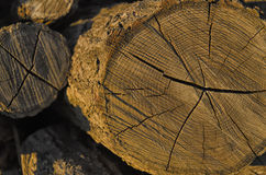 View of a tree stump Stock Image