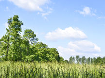 View through tree to a green meadow Royalty Free Stock Image