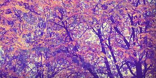 Autumn mood in my forest royalty free stock photography