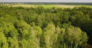 View of the tree tops in the rural park. In summer day stock video footage