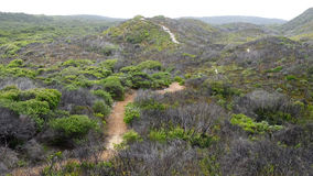 View from the Tree tops walkway at Walpole Western Australia in autumn. Royalty Free Stock Images