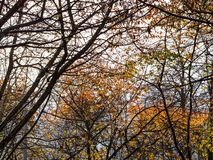 View of tree trunks and branches in autumn stock images