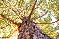 View of a tree underneath. In morning light with green leafs royalty free stock images