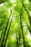 View of trees Royalty Free Stock Images