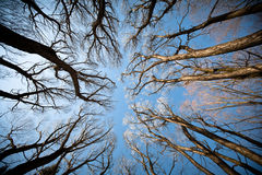 View of the trees from below. View of the trees below. autumn trees against the blue sky stock photo