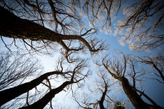View of the trees from below Stock Image