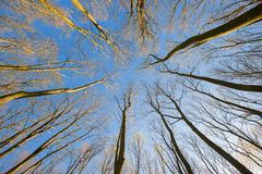 View of the trees from below. In summer stock photography