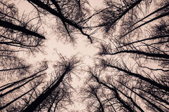 View of trees from the bottom. Black silhouettes on a white. Background Royalty Free Stock Photography
