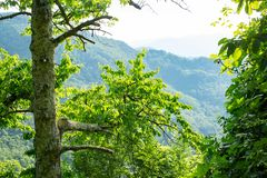 View through trees of distant hills. Above the village of Benabbio in the Tuscany region of Italy stock images