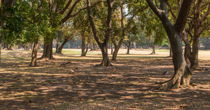 View Through the Trees Royalty Free Stock Photography
