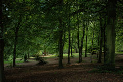 View of trees in England Stock Photography
