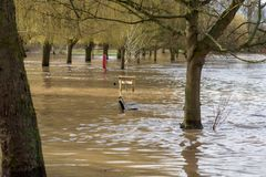 View through trees of extensive flooding in UK midlands Stratford upon Avon. River Avon bursts its banks and floods the low lying areas Stock Photography