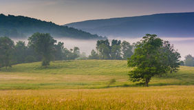 View of trees in a farm field and distant mountains on a foggy m Royalty Free Stock Photos