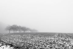 Minimalistic landscape with trees in the field on snowy mist Stock Photo
