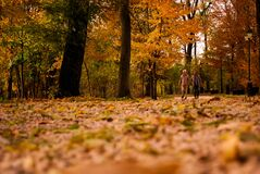 View of Trees in Forest during Autumn Royalty Free Stock Photography
