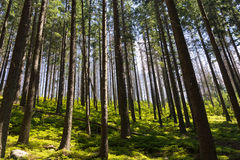View on trees in forest in sunny day in summer Stock Photo