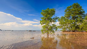 View of Trees Grass in Shallow Water under High Tide stock video footage