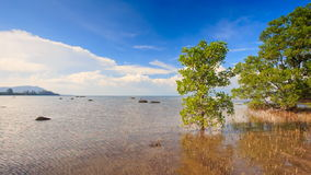 View of Trees Grass in Shallow Water under High Tide. Panorama of green trees and yellow grass in shallow water under high tide against azure sea and blue sky stock footage