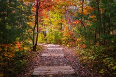 View of trees on jogging track during autumn season Royalty Free Stock Image