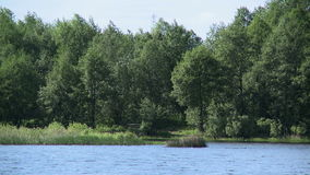 View of trees by lake, close-up stock footage