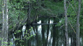 View of trees reflected in smooth surface of pond. Close-up stock video