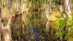 View of Trees Reflection in Pond Large Trees on Bank. Panorama of trees reflection in small pond water and green large trees on bank stock video footage