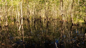 View of Trees Reflection in Pond Large Trees on Bank. Panorama of trees reflection in small pond water and green large trees on bank stock video