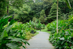 View of the trees in Singapore Botanic Garden.  Stock Photography