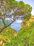 View through trees to ocean, Majorca, Banyalbufar. View of the ocean and rocky coast near Banyalbufar, Majorca through trees Royalty Free Stock Image