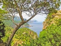 View through trees to ocean, Majorca, Banyalbufar Royalty Free Stock Photography