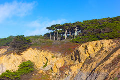 View of trees towering atop of Lands End Lookout. Royalty Free Stock Images