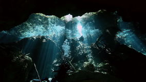 View of trees from underwater in Mexican cenote. stock video footage