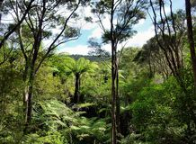 View through the treetops of native bushland. In the Okura Bush Scenic Reserve near Auckland with Royalty Free Stock Photos