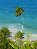 View of tropical background with palm tree Royalty Free Stock Photography