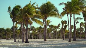View of tropical beach through coconut palm trees on sunset. Shadows of palm tree fronds fluttering on textured sand. Beach. Caribbean Sea. Riviera Maya Mexico stock video